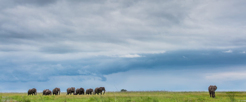 The Best Places To See Africa's Top 10 Bucket List Species
