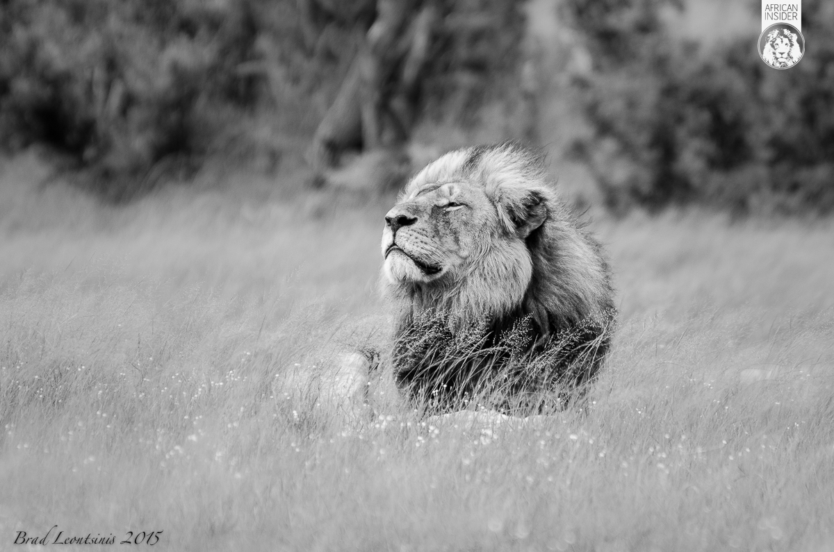 Cecil – King of Hwange 2002 - July 1 2015