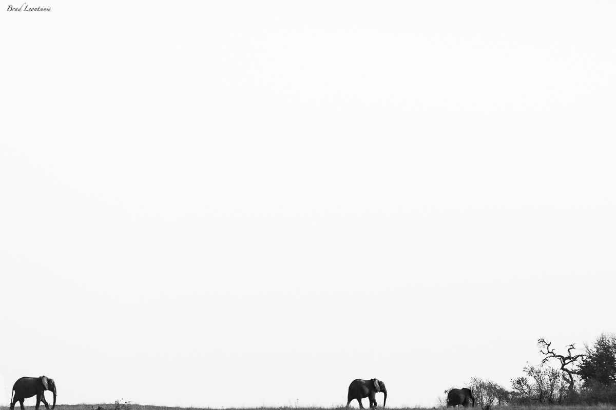 Elephants of Kruger - 2015 Drought