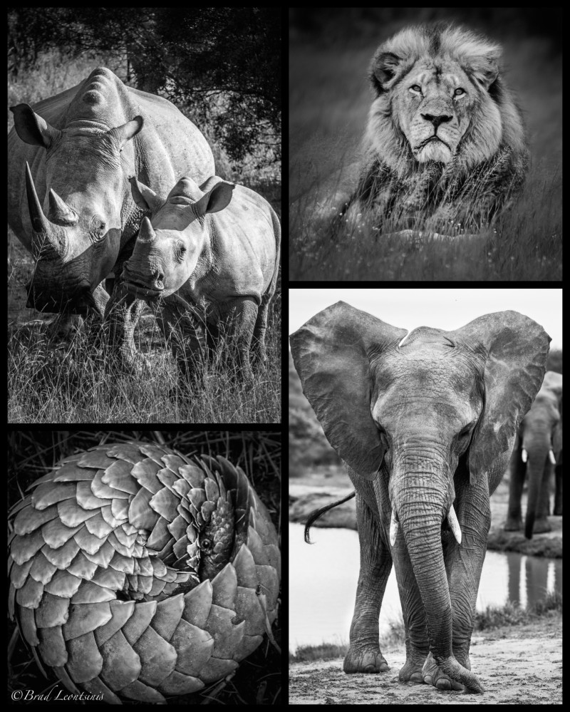 World Wildlife Day – The Time Is Now