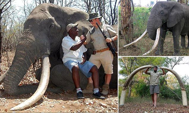 Largest elephant in 30 years shot.