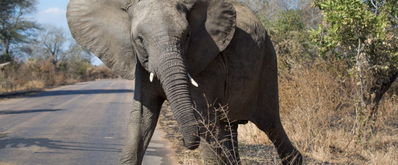 Animal Pedestrians Beware – This is the Kruger National Highway