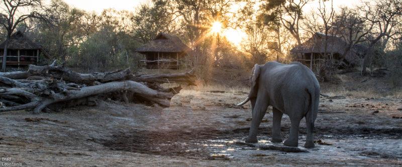 Savuti – Botswana's Secret