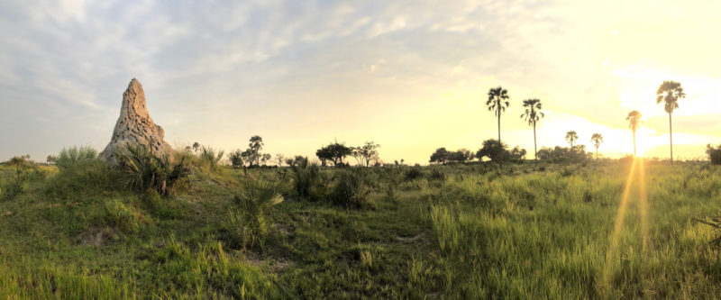 Sams' time in the Okavango Delta