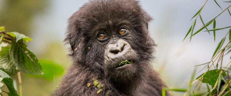 Experience Rwanda – A Visual Journey