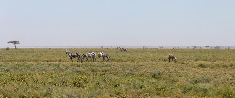 Serengeti – a Visual Journey